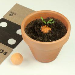 bombas semillas esturirafi