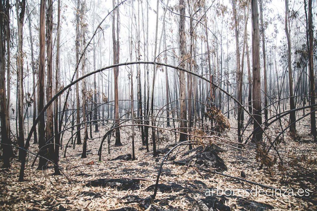 Incendios Forestales. Qué puedes hacer para ayudar