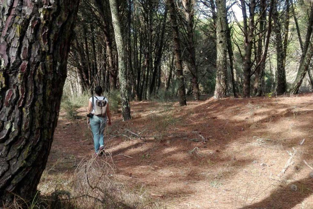 paseo bosque nerga galicia