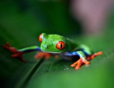 biodiversidad diversidad biológica rana