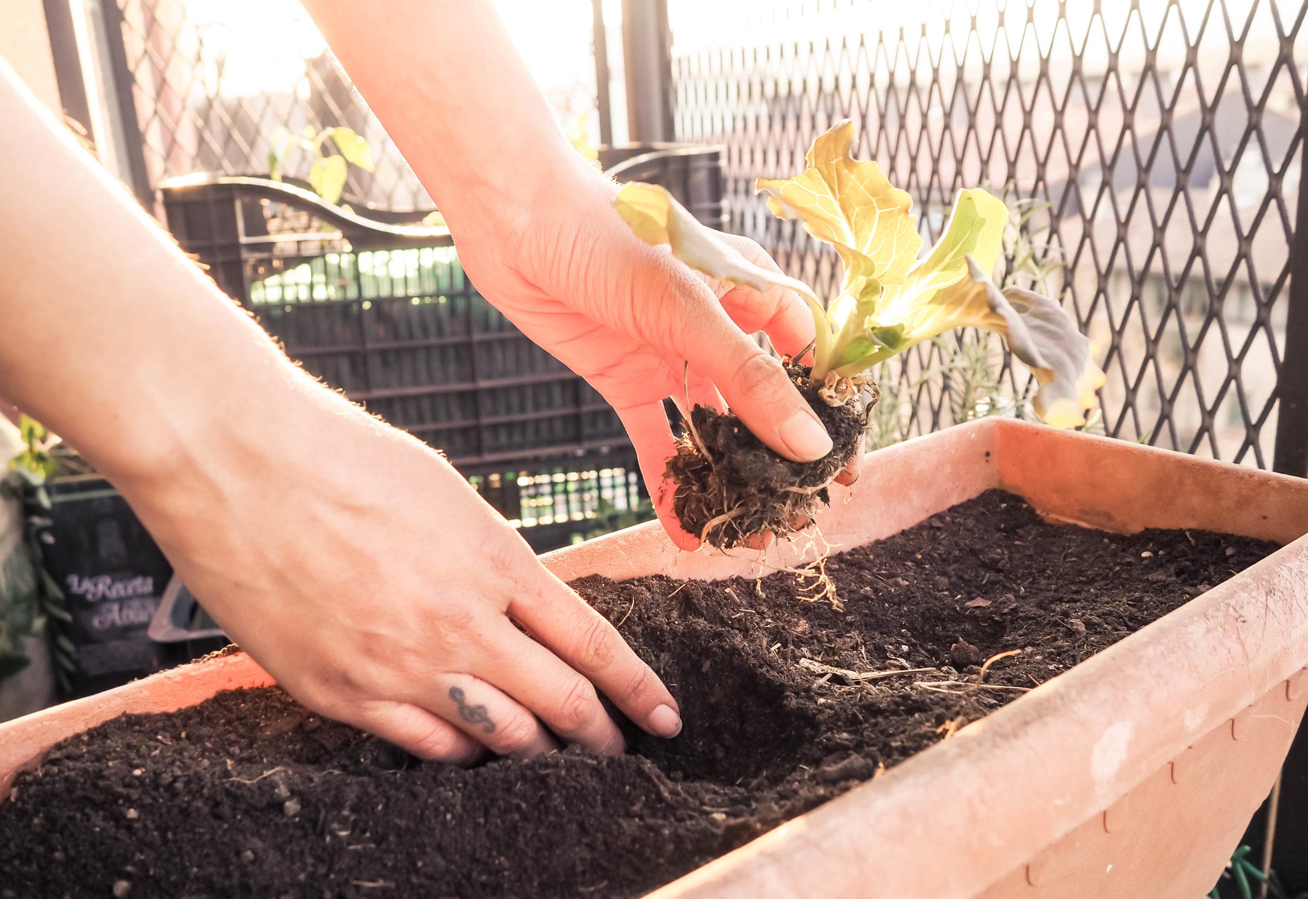huerto sostenible en un balcón detalle manos sembrando en maceta