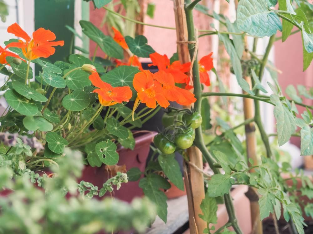 detalle maceta con flores y hortalizas en un balcón