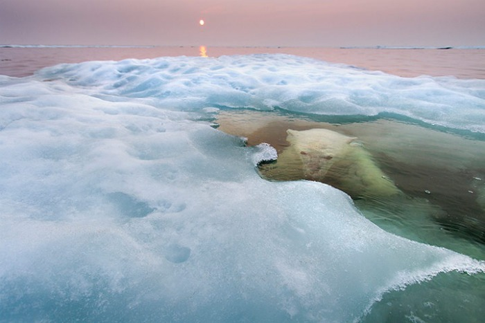 "Foto de Paul Sounders ganadora del Wildlife Photographer of the Year 2013 en la categoría de ""animales en su hábitat"""