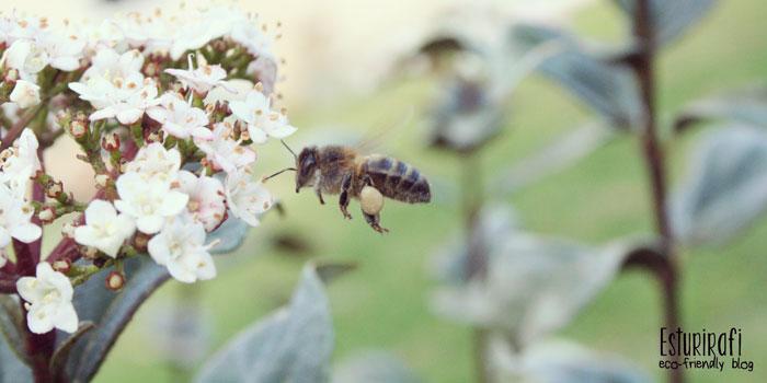Salvemos a las abejas - Esturirafi