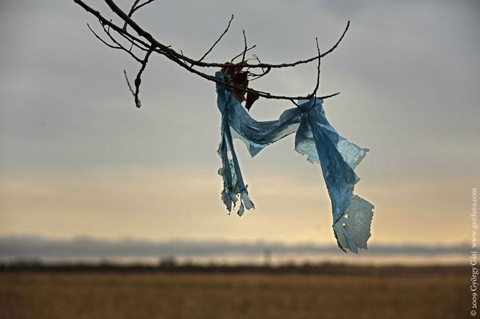 Trozo de plástico en una rama