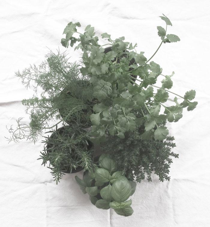 hierbas aromaticas diy conservacion ecologia