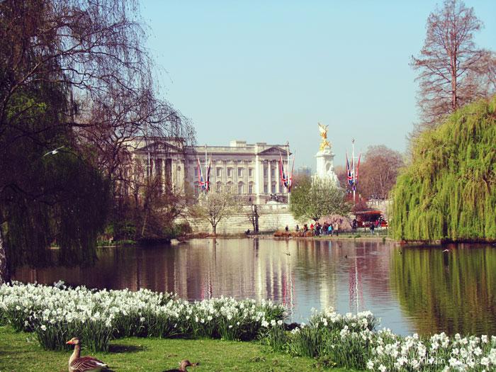 Londres en Semana Santa de hace dos años. El Buckingham Palace desde sus jardines, que están muy cerca de St. James Park un parque que no te puedes perder si vas a Londres.