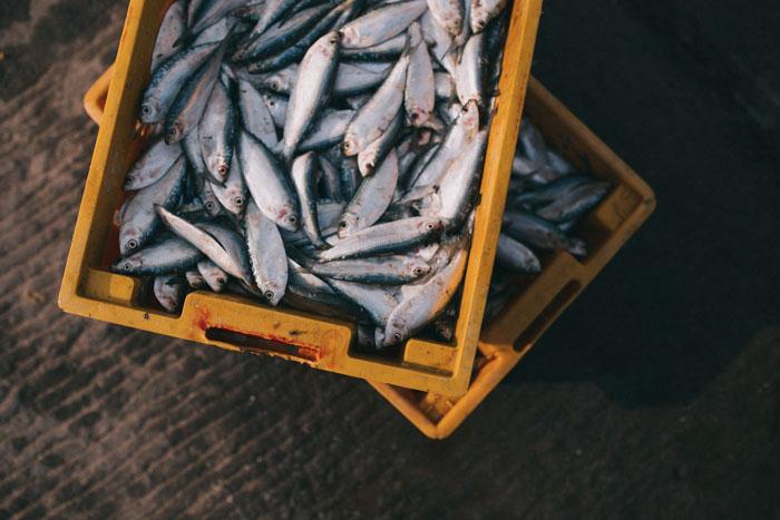Nos quedamos sin pescado
