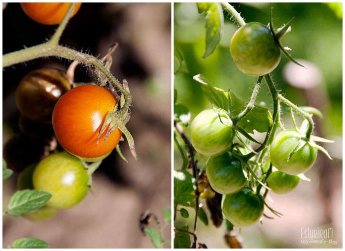 Un paseo por mi jardín #ecofriendly #tomatoes